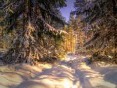 лес, winter, zima