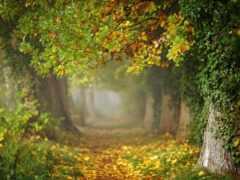 sony, ilce, осень