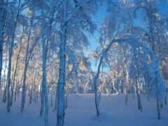 winter, снег, sweden