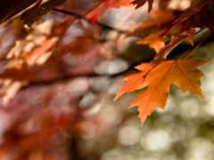 осень, макро, лист