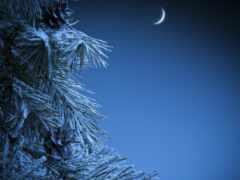 ночь, фотообои, лес