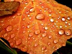 deviantart, осень, sui