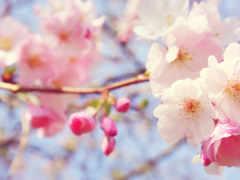 розовый, cvety, flowers