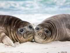 тюлень, море, морские