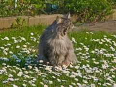 весна, коты, пришла