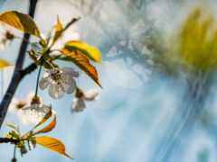 branch, картинка, цветение