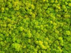 мох, зелёный, fore