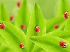 ladybug, diamond, lady