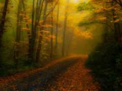 природа, carolina, лес