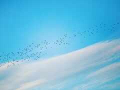 птица, минимализм, migration