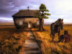 лошадь, степь, красивый