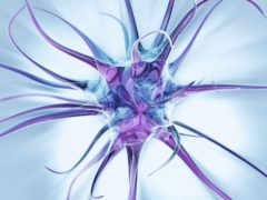 нейронные, сети, развивающихся