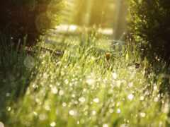 sun, трава, drop