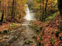 otoño, del, bosque