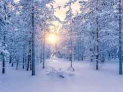 лес, winter, яndex