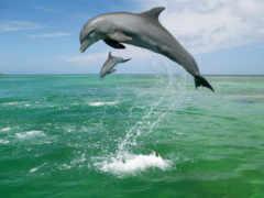дельфины, прыгающие