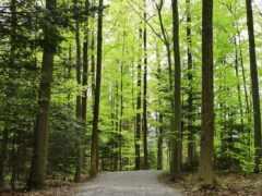 лесу, leto, цветок