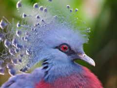 голубь, голуби, птица