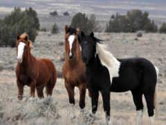 лошади, фотообои, stock