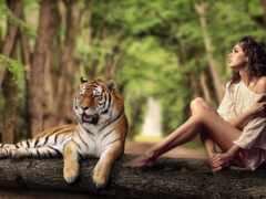 xper, tigris, sony