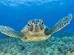черепаха, взгляд, море