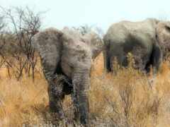 африка, природа, слоны