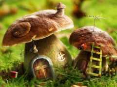 грибы, дома, грибов