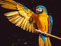 птица, клюв крыло