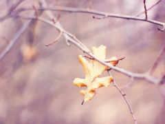 осень, leaf, природа