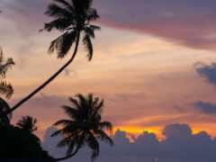 palm, природа, дерево