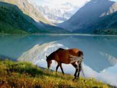 лошадь, гора, озеро