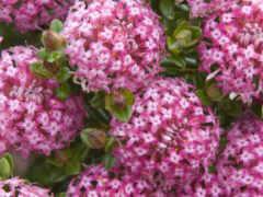 весна, бабочка, bush