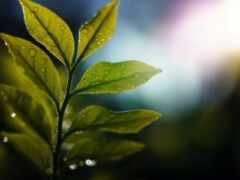 branch, лист