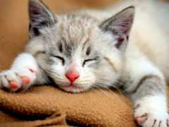 kucing, lucu, gambar