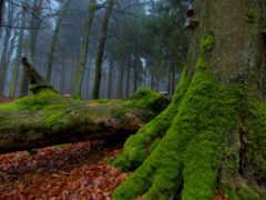 мох, trees, деревьях