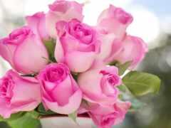 розовый, роза, взлёт