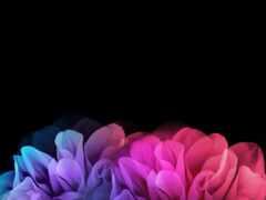 цветы, фон, чёрн