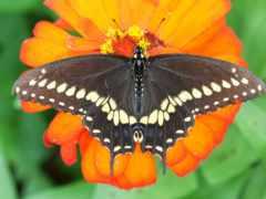 resimleri, indir, kelebekler