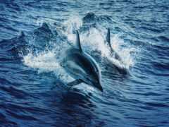 дельфины, вода