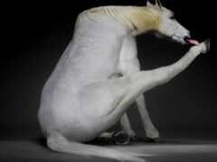 лошадь, white, грива