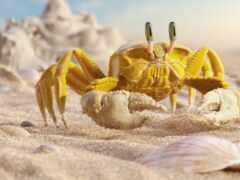 yellow, crab, арта