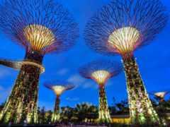 singapur, singapore, ogród
