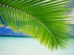 природа, sounds, tropical