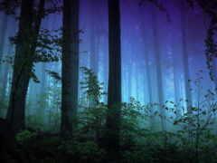 лес, фон, anim