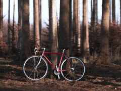 велосипед, лес, велосипедист