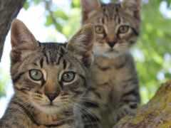 stoloboi, antelope, кот