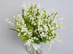 cvety, flowers, ландыши
