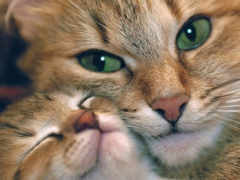 кошки, любов, mama