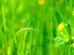 луг, iphone, трава