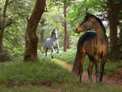 красивые, лошади
